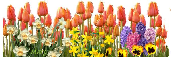fond-tulipe